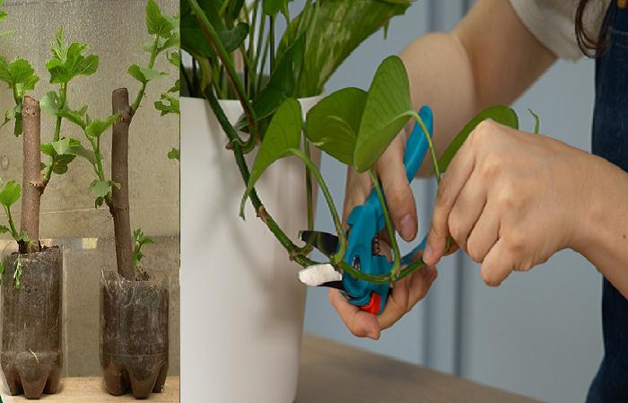 Aprende a reproducir tus plantas por esquejes