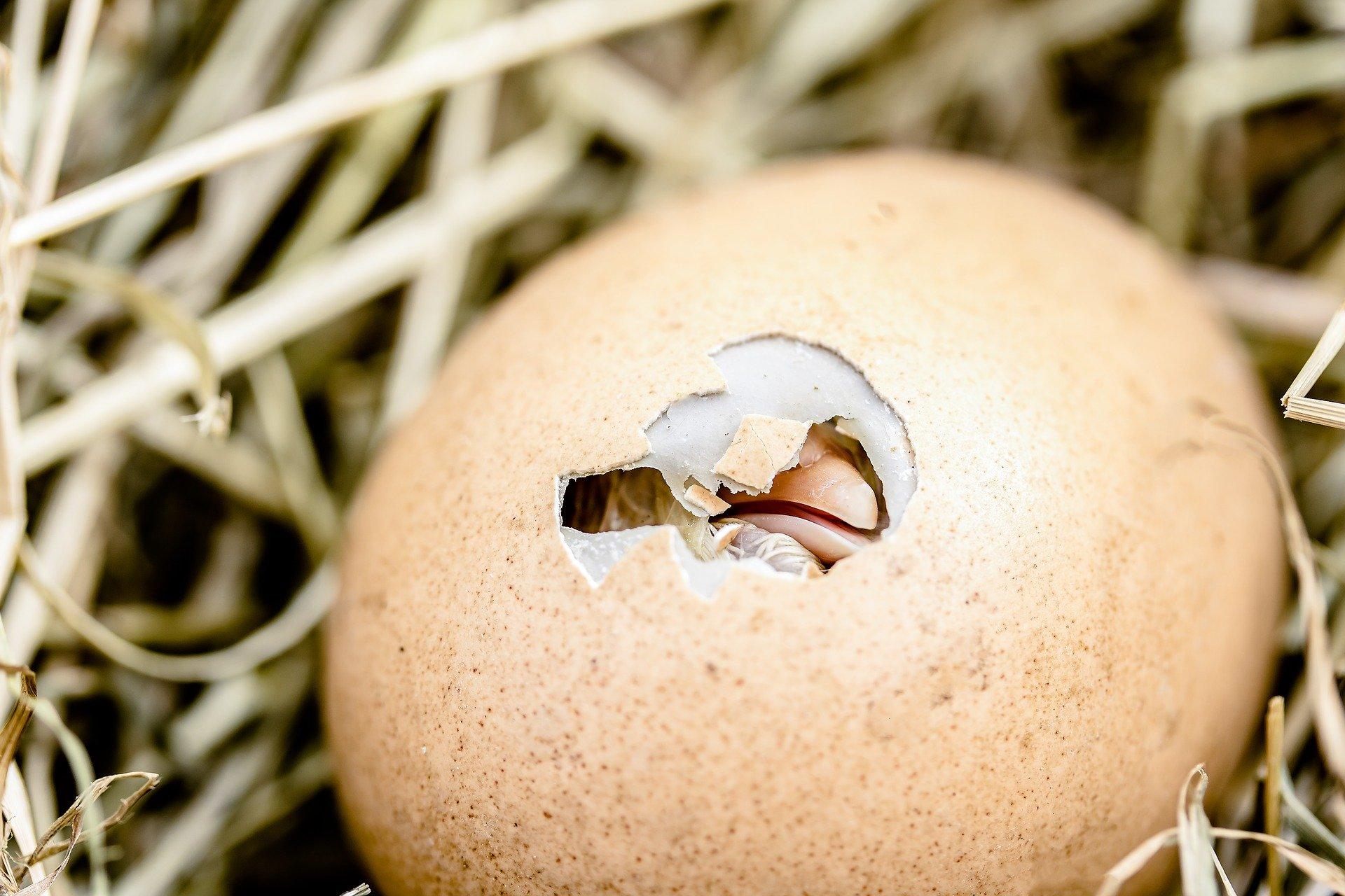 Como dar Usos de cascaron de huevo en Agricultura