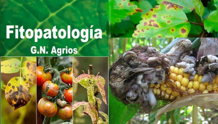 Extraordinario Libro de fitopatología de G. N. Agrios.pdf.