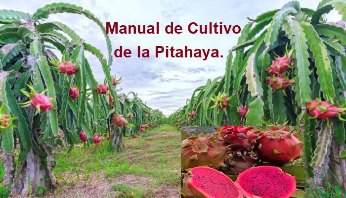 Gratis: Manual de cultivo de Pitahaya pdf.