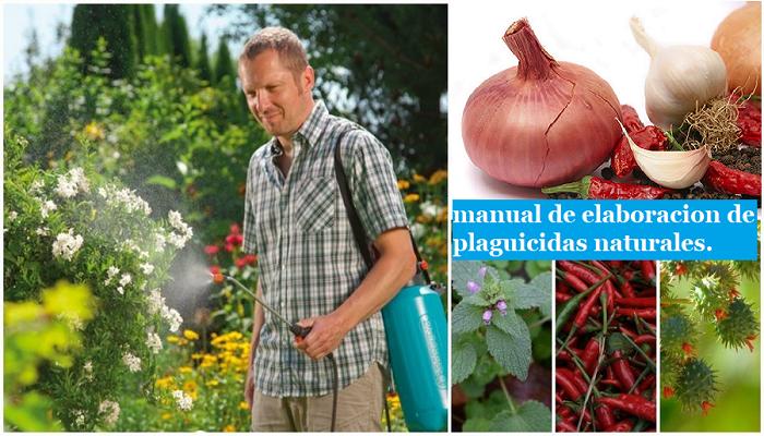 Gratis: Manual para la elaboración de plaguicidas naturales.
