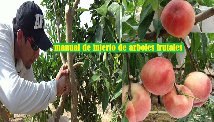 Manual de Injertos de Arboles Frutales PDF.